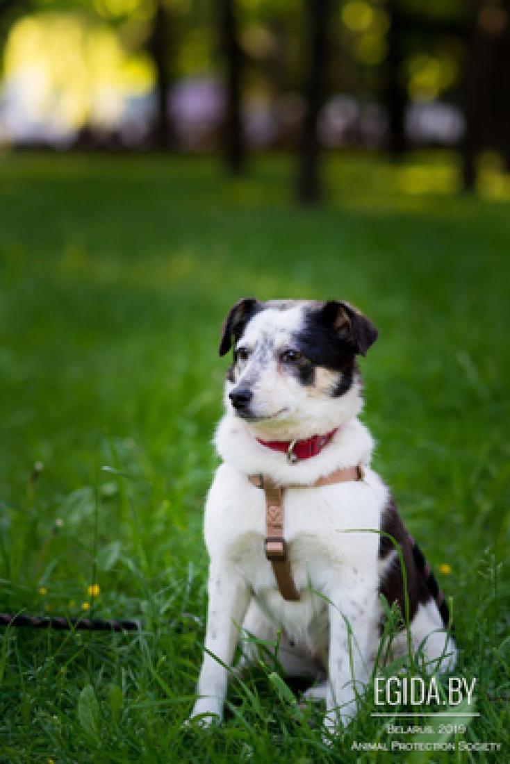 Собачка Айва ищет дом
